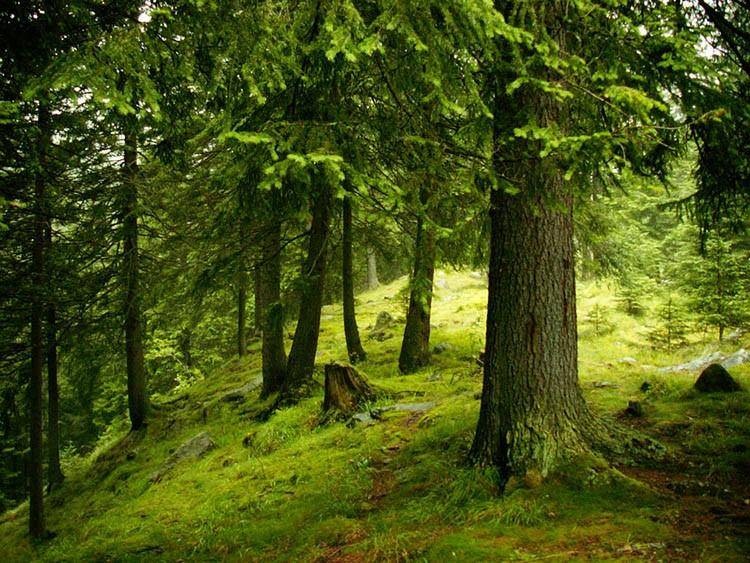 România Cedează Parcul Național Retezat